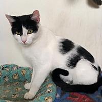Adopt A Pet :: Olivia - Corinne, UT