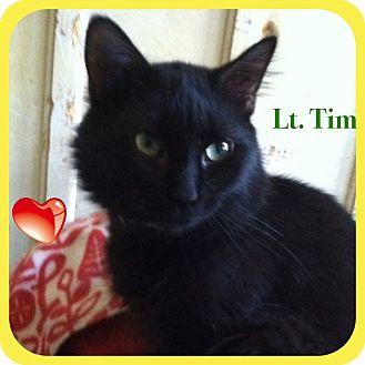 Maine Coon Cat for adoption in Harrisburg, North Carolina - Lieutenant Tim