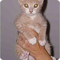 Adopt A Pet :: Peanut - Jenkintown, PA