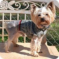 Adopt A Pet :: Zippy - Athens, GA