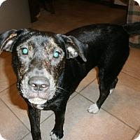 Adopt A Pet :: Arizona - Silsbee, TX