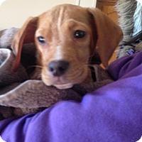 Adopt A Pet :: Diago - Carey, OH