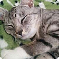 Adopt A Pet :: Sauterne - Vancouver, BC