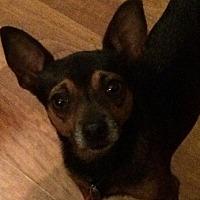 Adopt A Pet :: Batman - Evans, GA