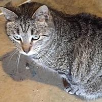 Adopt A Pet :: Mr. Bates - Morganton, NC