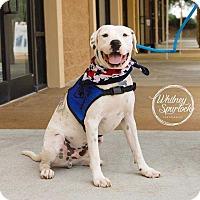 Adopt A Pet :: Jax - Dawson, GA