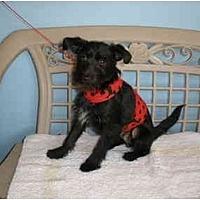 Adopt A Pet :: Oliver - Corona, CA