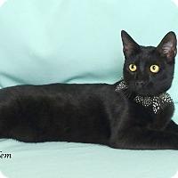 Adopt A Pet :: Salem - Kerrville, TX