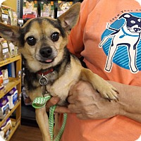 Adopt A Pet :: Pedro - Memphis, TN