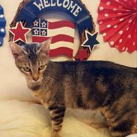 Adopt A Pet :: LoLo - Brownwood, TX