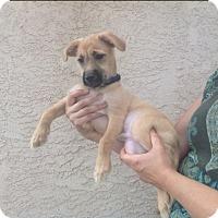 Adopt A Pet :: sampson - adopted - El Cajon, CA