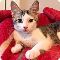Adopt A Pet :: Pacy - Centerville, GA