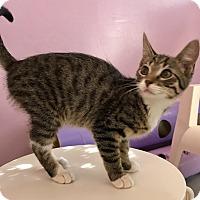 Adopt A Pet :: CHLOE - Bakersfield, CA