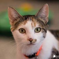 Adopt A Pet :: Cammi - Kenosha, WI
