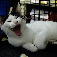 Adopt A Pet :: Wilbur - College Station, TX