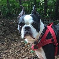 Adopt A Pet :: BoBo - Cary, NC