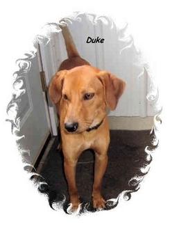 Hound (Unknown Type) Mix Puppy for adoption in Irvington, Kentucky - Duke