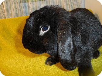 Lop-Eared Mix for adoption in Hillside, New Jersey - Pearl