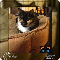 Adopt A Pet :: Cheerioo - Mobile, AL