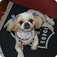 Adopt A Pet :: Asia - Richmond, VA