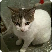 Adopt A Pet :: Lola - Montreal, QC