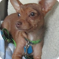 Adopt A Pet :: Radar - Jacksonville, FL