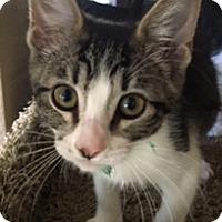 Adopt A Pet :: MaxL - North Highlands, CA