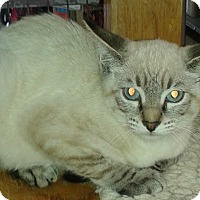 Adopt A Pet :: Oliver - Whittier, CA
