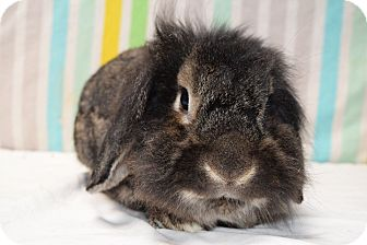 Lop-Eared Mix for adoption in Fountain Valley, California - Ewok