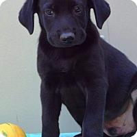 Adopt A Pet :: Durant - Pleasant Plain, OH