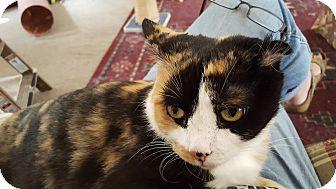 Calico Cat for adoption in Irwin, Pennsylvania - Keana