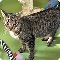 Adopt A Pet :: Chicky - Bedford Hills, NY