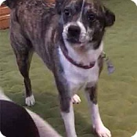 Adopt A Pet :: LUCY - URGENT - Amherst, OH