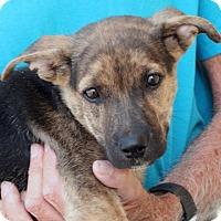 Adopt A Pet :: Cooper - Palmdale, CA