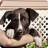 Adopt A Pet :: AVALON of The Jersey Shore Pu - Media, PA