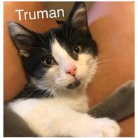 Adopt A Pet :: Truman - Jasper, IN