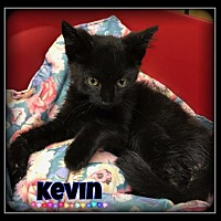 Adopt A Pet :: Kevin - Hartford City, IN