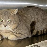 Adopt A Pet :: Draco - Indiana, PA