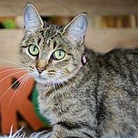 Adopt A Pet :: Katie - Woodstock, GA
