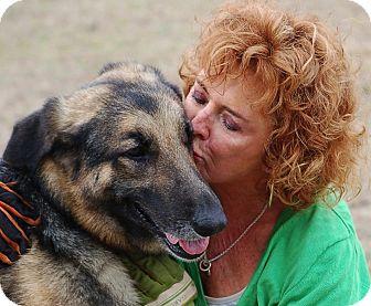 German Shepherd Dog Dog for adoption in Preston, Connecticut - Lady#2