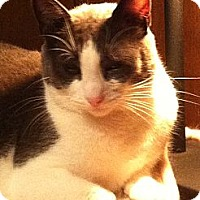 Adopt A Pet :: Houdini - Jersey City, NJ