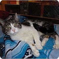 Adopt A Pet :: Baxter - Kingston, WA
