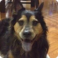 Adopt A Pet :: Star - Tucker, GA