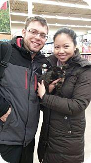 Domestic Shorthair Kitten for adoption in Warren, Michigan - Marble