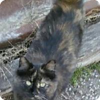 Adopt A Pet :: Vivian - Denton, TX