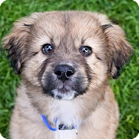 Adopt A Pet :: Chewy - Meridian, ID
