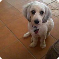 Adopt A Pet :: Sunny - Golden Valley, AZ