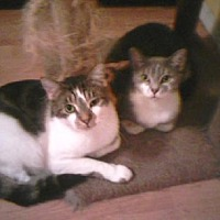Adopt A Pet :: Antoinette & Bernadette - Satellite Beach, FL
