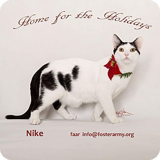 Domestic Shorthair Kitten for adoption in Riverside, California - Nike