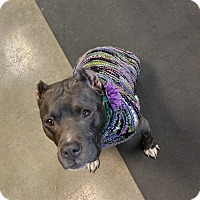 Adopt A Pet :: Demi - Des Peres, MO